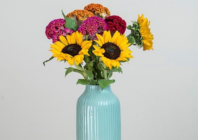 Our new sunflowers - Bloomy Blog