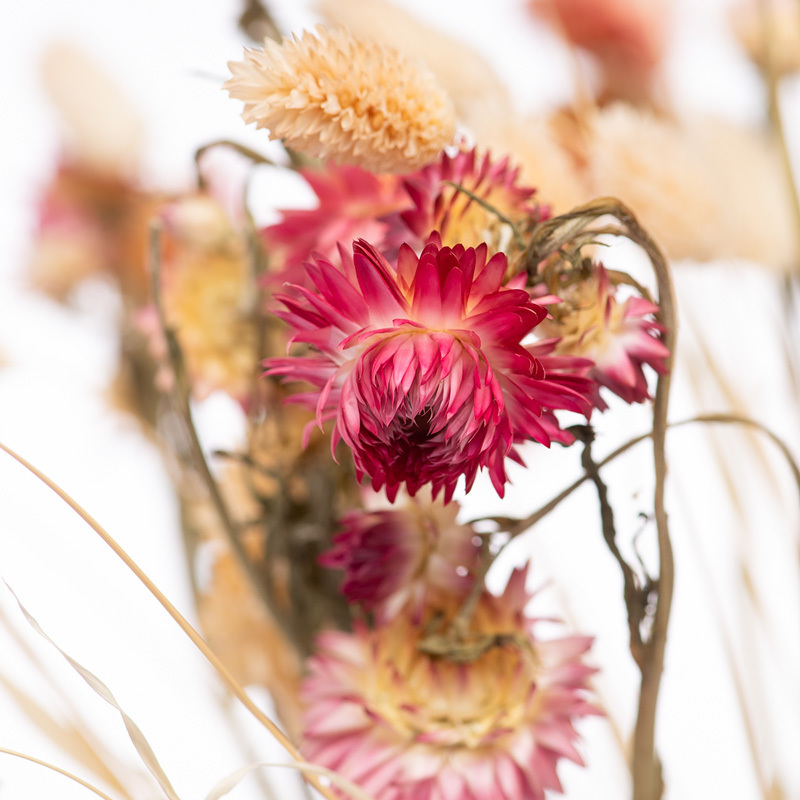Dried Flower Care Tips Bloomy Blog - Dried Flower Care Tips - Bloomy Blog