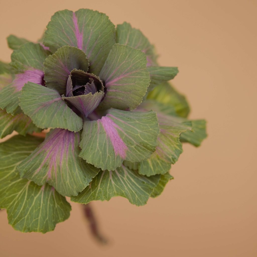 New flowers in our fall collection Bloomy Blog - New flowers in our fall collection - Bloomy Blog