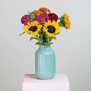 Our new sunflowers Bloomy Blog - Our new sunflowers - Bloomy Blog