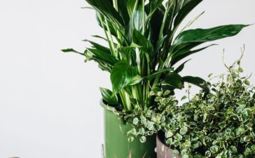 Urban Jungle with our Plant Buddies - Bloomy Blog