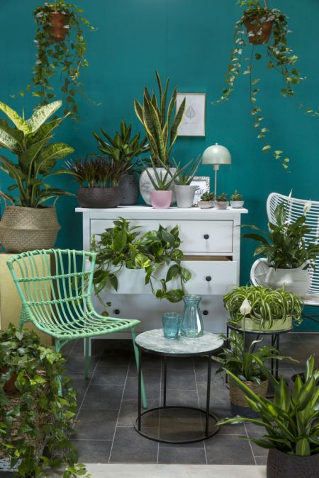 Urban Jungle with our Plant Buddies Bloomy Blog - Urban Jungle with our Plant Buddies - Bloomy Blog